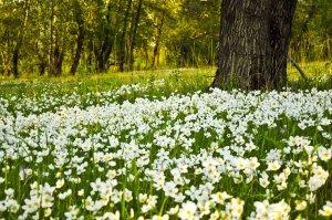 flower_fields_by_tumana_stock,google image