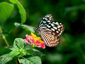 Flower,_natural_flower,_nature,_butterfly_Wallpaper,google image