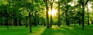 healing-gardens1-920x350,google image