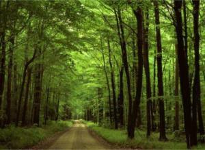 WonderfulForest,google image