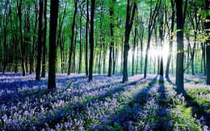 domesday book forest, google image