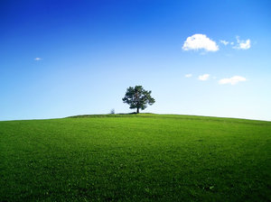 A tree on the horizon, God-Waiting, google image