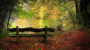 autumn-landscape-bench on lake-google