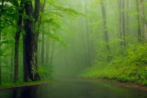 Foggy Morning Nature