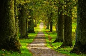 nature-spring-forest-park-6807,goodfon.su,google image