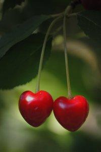 true love, valentine