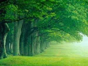 Green-Nature-Wallpaper-Lush-Summer-Luoisville by Skilal