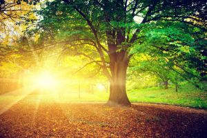 Enduring-Nature with Trees, Fall-2 by wallpaper