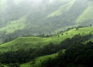 Shola Grasslands-Wikipedia